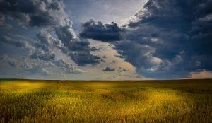 champ de blé nourrir la population mondiale culture bio sans pesticide