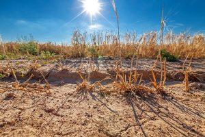 champs sécheresse